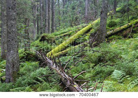 Poland Nature