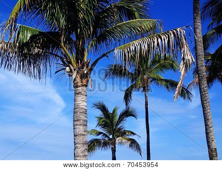 Great Stirrup Cay Palms