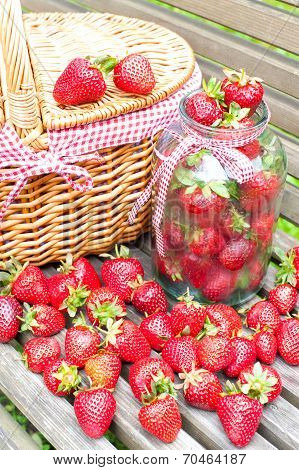 Ripe Fresh Strawberry Crop. Summer Bounty.