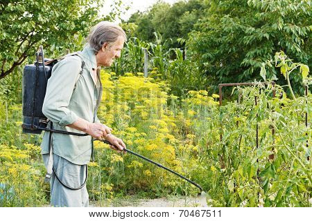 Old Man Spraying Of Pesticide On Country Garden