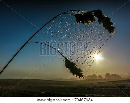 Spider Web Dewdrops