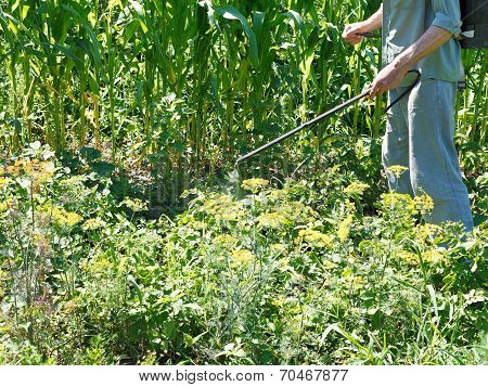 Man Sprays Pesticide On Potato Plantation