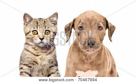 Portrait of a kitten and puppy