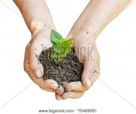 Soil And Green Sprout In Farmer Hands