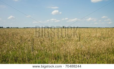 Fields Of Cereal Crops