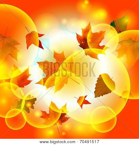 autumn autumnal background beautiful beauty botany bright brown color cooper copy space design down