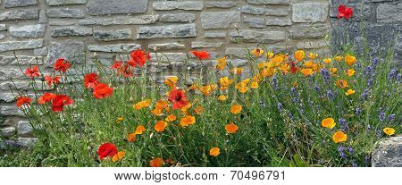 Red Poppy, Lavender And Iceland Poppy Against Grungy Stone Wall