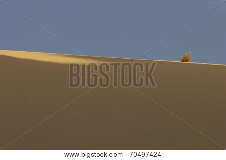 Dry Bush in Desert