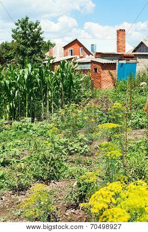 View Of Village Garden On Backyard