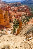 image of hoodoo  - spectacular Hoodoo rock spires of Bryce Canyon Utah USA - JPG