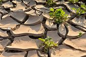 foto of water shortage  - dry cracks in the land - JPG