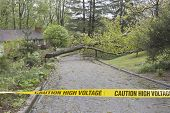 stock photo of tree lined street  - A large wet oak tree and electrical wires torn down by a Spring storm lie across a neighborhood street blocking passage behind yellow police caution tape warning of high voltage