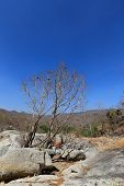 stock photo of drought  - Dried trees in the drought forest inside drought empty Song Long Song  - JPG