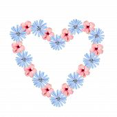 picture of chicory  - Shaped hollow heart composed of chicory and hibiscus flowers isolated on white background - JPG