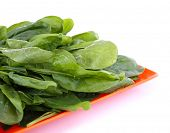 image of sorrel  - Tuft of fresh sorrel in orange square plate isolated on white - JPG