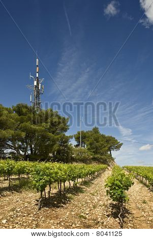 Hill Top Vineyard