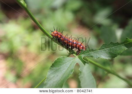 Catapillar on a leaf