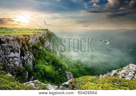 Birds over plateau