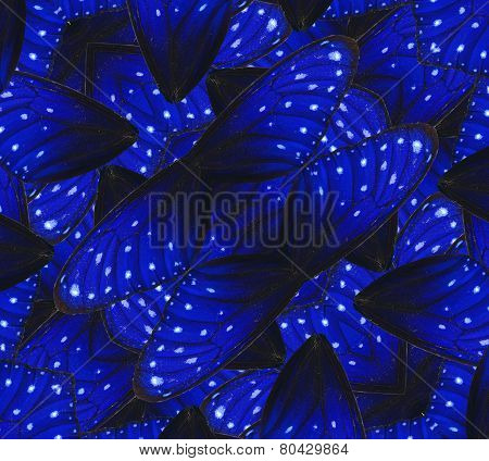 Blue background texture made of Stripe Blue Crow Butterfly's wings