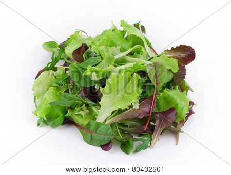 Green and red leaf of lettuce