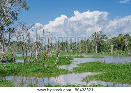 Amazon forest and black river