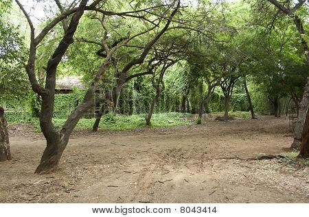 Tree Covered Walk Way