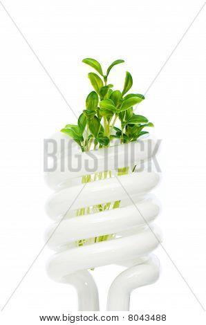 Ahorro de energía lámpara con plántulas verde sobre fondo blanco