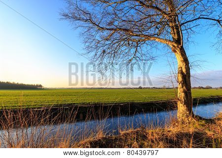 A Tree In Evening Glow In The Countryside