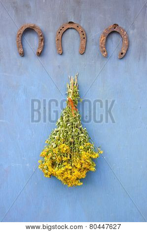 Three  Antique Horseshoe And Bunch St. Johns Wort Flowers On Wall
