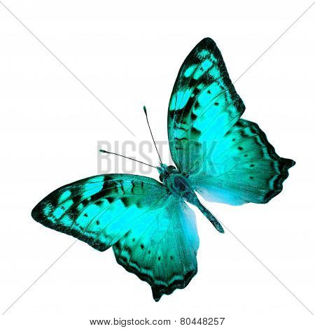 Exotic Flying Blue Butterfly In Fancy Color Profile Isolated On White Background (vagrant Butterfly)