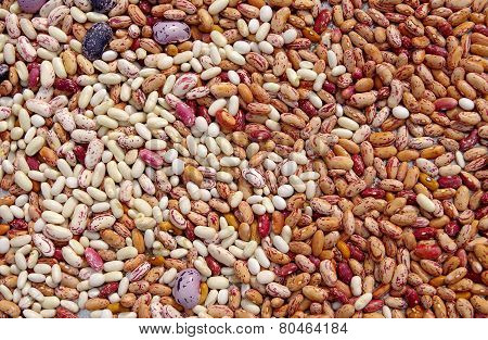 Different Types Of Mottled Beans