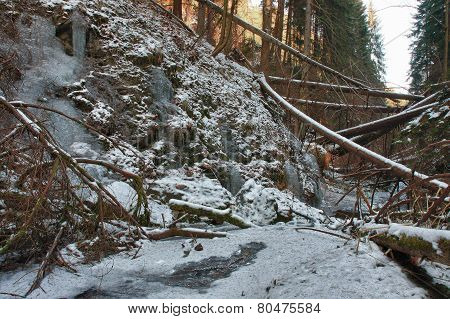 Damaged Fallen Trees On Creek In Valley In Winter  After Strong Storm