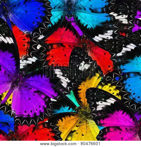 Mix Of Various Color Malay Lacewing Butterflies In A Gace Complilation Background Texture