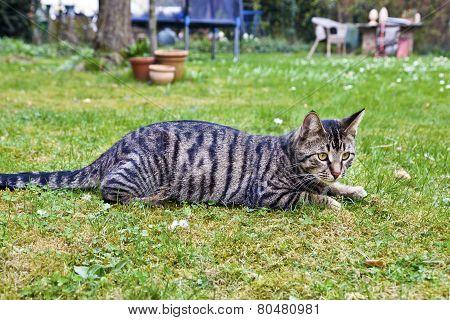 Cute Cat In The Garden In Green Grass