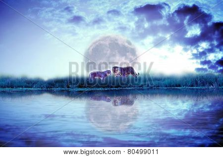 Forest river with tiger isolate on dark cloudy and moon background