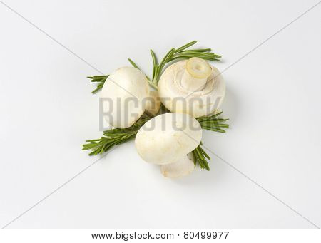 three pure white champignon mushrooms decorated with rosemary