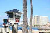picture of waikiki  - This image showcases a lone tree on the edge of Waikiki Beach - JPG