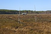 foto of marshlands  - View of a marshland in autumn - JPG