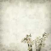 pic of narcissi  - textured old paper background with doule narcissi - JPG