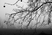 stock photo of dead plant  - Black and White of dead plant in winter - JPG