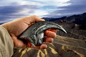 pic of claw  - Velociraptor claw held in hand also knowned as raptor claw - JPG