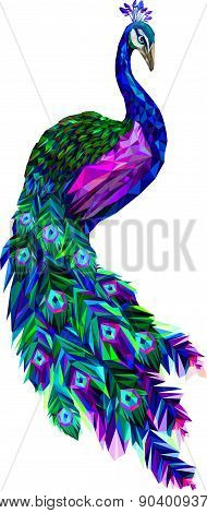 Vector Polygon Peacock, Conceptual Illustration