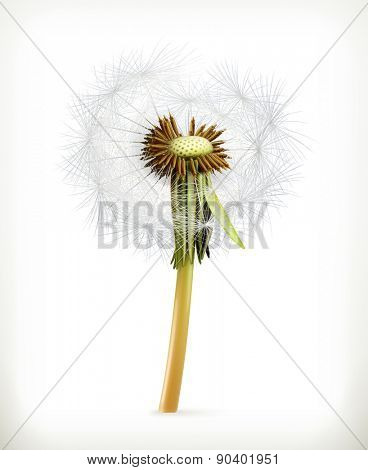 Head of dandelion, summer flowers, vector icon