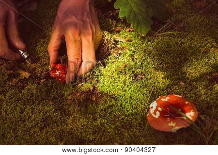 Man Cuts A Mushroom In The Forest