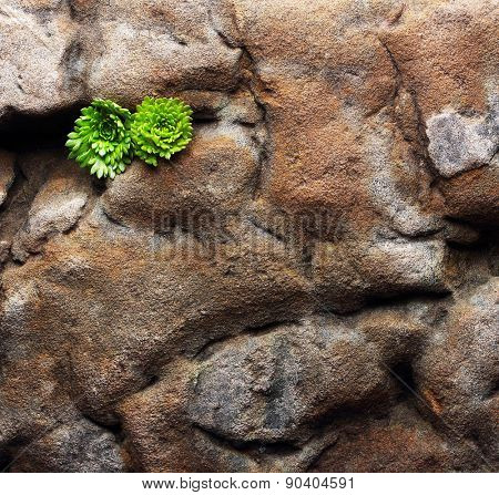 Old stone texture background with moss.