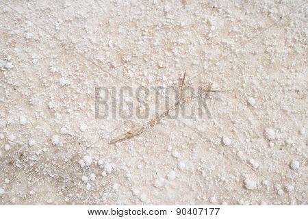 Salt Lake Texture Detail