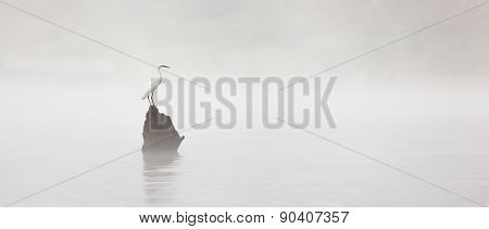 White Heron on a misty lake