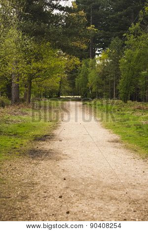 A Walk Throughh The Trees