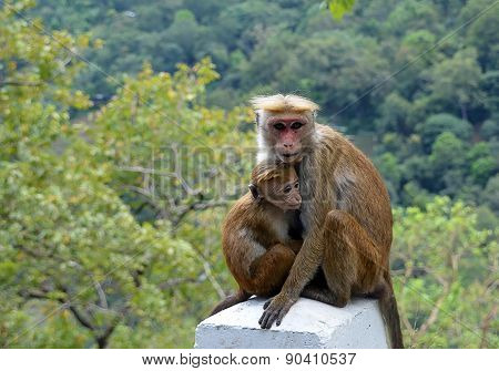 Monkey With Baby Sitting By The Road