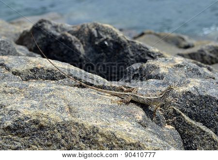 Little Lizard Sitting On The Rock In Nature Detail Photo